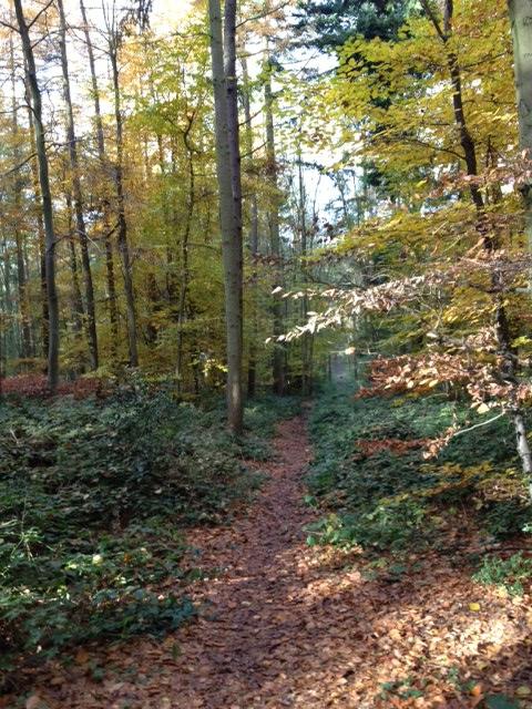 Sulham Woods 2
